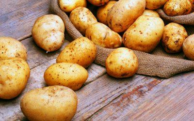 Levity discuss Calcium nutrition in Potatoes