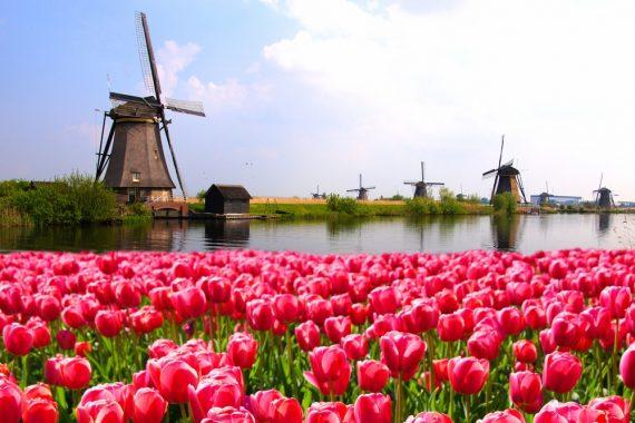 New Benelux Distributor Plant Coaching