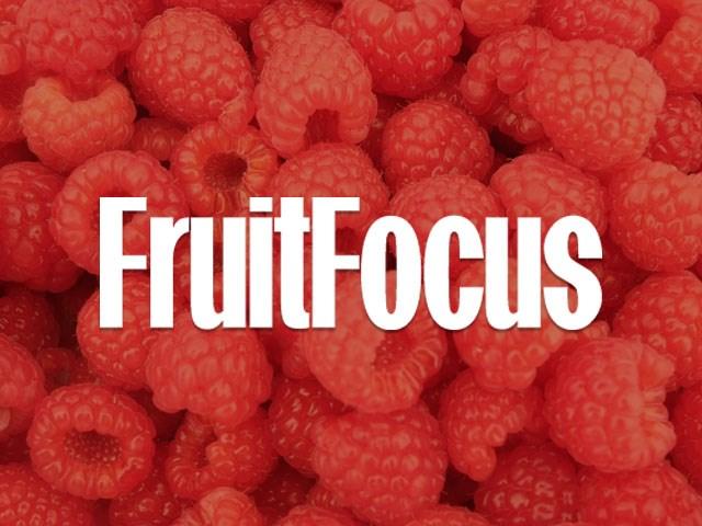 Levity Exhibit at Fruit Focus 2016