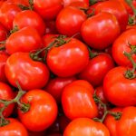 Processing tomato crops, key nutrients and how to use them better (Part 1. Nitrogen and Calcium).