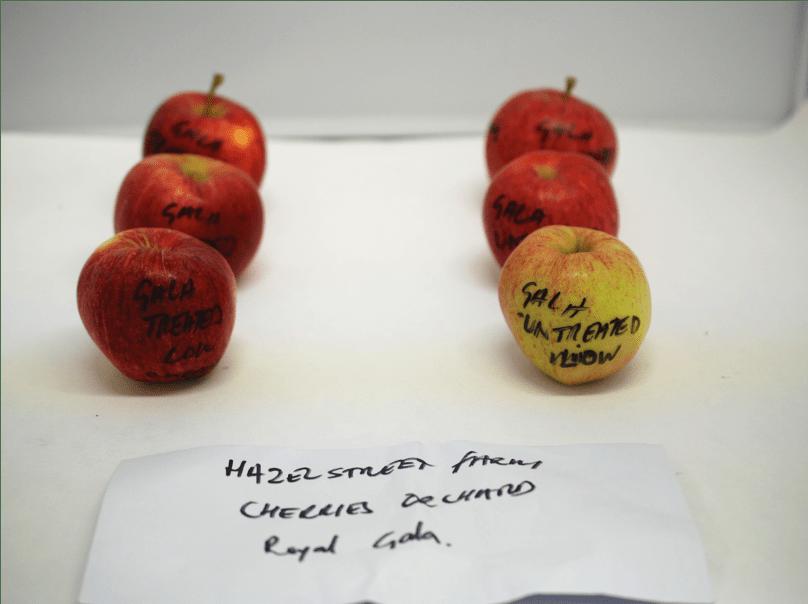 Sulis treated appled