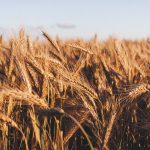 Nitrogen Form – Impacts on Crop Physiology