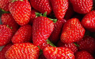 Strawberries – How growth partioning increases yield.