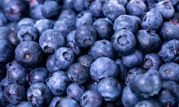 Understanding Plant Physiology – The Key to improving Calcium levels in Blueberry